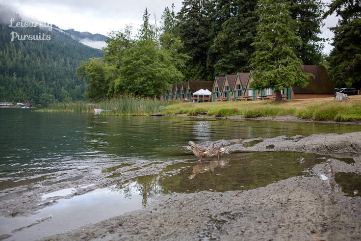 nslp_lakecrescent_1196